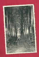 C.P.  Flobecq   La  Houppe   =  Une  Promenade - Flobecq - Vloesberg