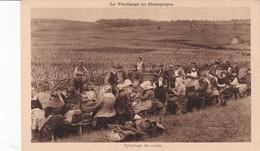 La Vendange En Champagne Epluchage Des Raisins Moet Et Chandon - France