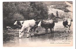 Digne (04 - Alpes De Haute Provence)  Le Torrent De Mouiroués - Vaches - Digne