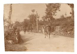 PHOTO ORIGINALE - CHEVAL CHEVAUX SELLE CAMPAGNE - HORSE - Persone Anonimi