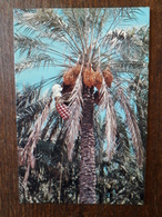 L21/776  Bahrain . Palm Trees . Timbres Au Dos - Bahrain
