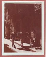 SICILE AGRIGENTE GIRGENTI 1926  Photo Amateur Format Environ 5,5 Cm X 7,5 Cm - Orte