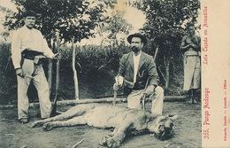 355 Pungo Andongo  Leoa Caçada Em Armadilha  Edit Osorio Loanda . Chasse Lion . Hunting - Angola
