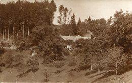 Carte PHoto à Identifier Maison Forestière - Postcards