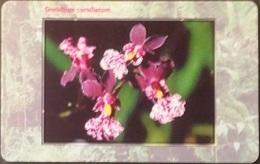 Telefonkarte Tschechien - Orchidee,orchid - 41/09.99 - Czechoslovakia
