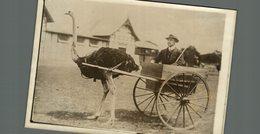 AVESTRUZ STRUISVOGEL AUTRICHE ATTELAGE  16*12CM Fonds Victor FORBIN 1864-1947 - Fotos