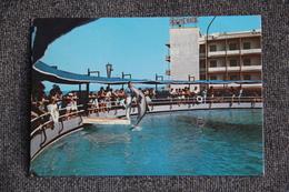 RICCIONE, Riviera Adriatica - Aquario - Otras Ciudades