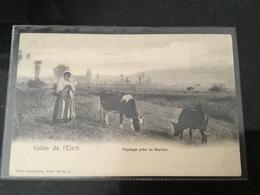 Mersch Nels Rare - Cartes Postales