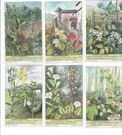 Plantes Grimpantes Vigne  Houblon Etc  6 Chromos Série Complète Didactique Pub:Liebig 110 X 70 Mm  TB - Liebig