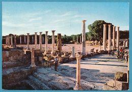 CHYPRE - Marble Forum - Salamis - Chypre