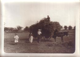 AGRICULTURE - PHOTO NON SITUEE - SCENE DE FENAISON , ATTELAGE ÂNE - Métiers