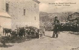 13560218 Grand_Saint_Bernard Les Chiens La Margue Grand_Saint_Bernard - VS Wallis
