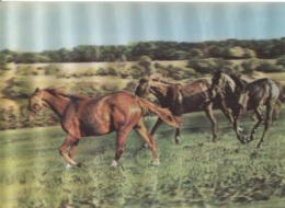 CPM - CHEVAUX - Carte RELIEF - Edition TOPPAN TOP Stéréo - Horses