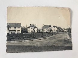 Carte Postale Ancienne Waremme Rue Des Sorbiers - Waremme