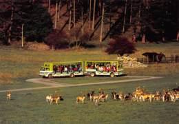 Han - Safari-Car - Rochefort