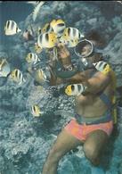 Bora Bora- Le Plongeur Du Bateau A Fond De Verre-cpm - Polinesia Francese