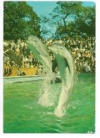 14) BOTTLED NOSE DOLPHINS AT WINDSOR SAFARI PARK. ENGLAND. - Delfini
