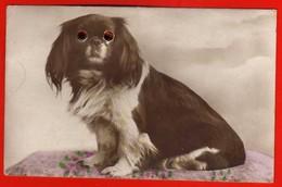CPA - Dog Chien Avec Des Yeux En Verre ( 2 Scans ) - Dogs