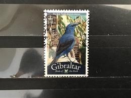 Gibraltar - Vogels (UK) 2008 - Gibraltar