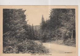 CPA-69-Rhône- COURS- Bois De Coucous- - Cours-la-Ville