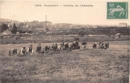 25-PONTALIER-CULTURE DE L'ABSINTHE - Pontarlier