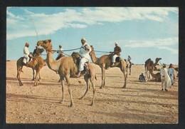 Qatar Picture Postcard Desert Camels Riders View Card - Qatar
