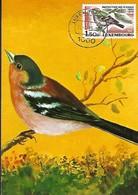 12.4.1983  -  Protection Des Oiseaux - Cartes Maximum