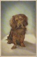 Animaux - Portrait Chien Basset - Dogs