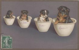 Animaux - Chien - Portrait Chiens Dans Bol - Dogs