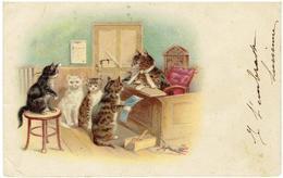 Katten - Chats - Cats - Fantasie à L' Ecole - Katten