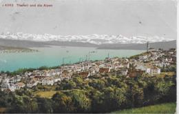 AK 0273  Thalwil Und Die Alpen Um 1911 - ZH Zürich