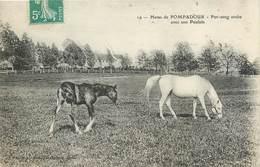 Lot 2 CPA 19 Corrèze Haras De Pompadour Pur Sang Arabe Et Son Poulain Equitation Jument Poulinières Dans Un Paddock - Autres Communes