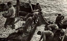 BRETAGNE - DOUARNENEZ  Angeln Fishing La Pêche Pesca Visvangst - Pesca