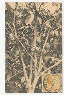 ( Maximum ) Card Belgian Congo 1927 Cocoa - Alimentation