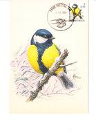 Buzin - Mésange Charbonnière - 1985-.. Birds (Buzin)