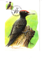 Buzin - Pic Noir - 1985-.. Oiseaux (Buzin)