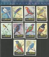 RIZLA  VOGELS OISEAUX BIRDS SERIE 7 Issued The Netherlands 1966 - Zündholzschachteletiketten