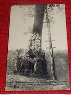 RABOSEE - BARCHON  -  Le Lieutenant Edmond Simon  Fut Tué Sur Ce Chêne à Son Poste D'observation En 1914 - Blegny