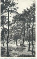 Knokke - Knocke - Knocke-Zoute - La Sapinière - Sparrenbos - Ern. Thill No 107 - 1959 - Knokke