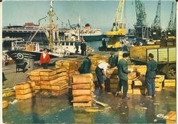 Boulogne Sur Mer-2 Cartes -le Debarquement De Poisson-retour De Peche- Cpm - Boulogne Sur Mer