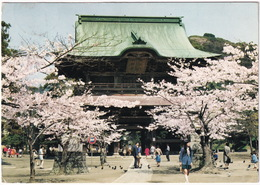 Kamakura - Kenchoji Temple  - Spring Blossom - (Nippon/Japan) - Tokyo