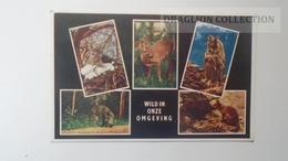 D164854  Netherlands - Maarn, Vakantieverblijf De Stamerhoef - Ca 1960  Deer  Owl Fox Boar, Verrat, Renard, Hibou, Cerf - Maarn