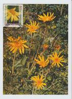 Suisse Carte Maximum Fleurs 2003 Arnica 1748 - Cartoline Maximum