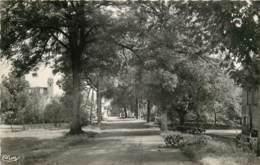 70 - GRANDVELLE - Entrée Du Village (cpsm Années 50) - Autres Communes