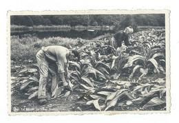 Herbeumont - La Récolte Du Tabac, Homme Et Femme - Circulé 1948 - Edit. G. Gaillard, Herbeumont - Herbeumont