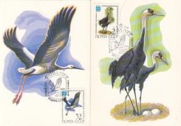 80177- ORIENTAL STORK, HOODED CRANE, BIRDS, MAXIMUM CARD, OBLIT FDC, 2X, 1982, RUSSIA - Cigognes & échassiers