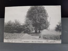 BOITSFORT Rue Des 3 Tilleuls Obl 1903 - Watermaal-Bosvoorde - Watermael-Boitsfort