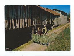 Tabac Dans La Vallée De La Semois - La Récolte Animée - Pas Circulé - Combier - Autres