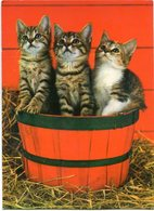 TRES GATOS EN UNA CANASTA, THREE CATS IN A BASKET, TROIS CHATS DANS UN PANIER. POSTAL POSTALE CPA NO CIRCULE - LILHU - Gatos
