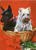 DOS PERROS EN UNA CANASTA, TWO DOGS IN A BASKET, DEUX CHIENS DANS UN PANIER. POSTAL POSTALE CPA NO CIRCULE - LILHU - Perros